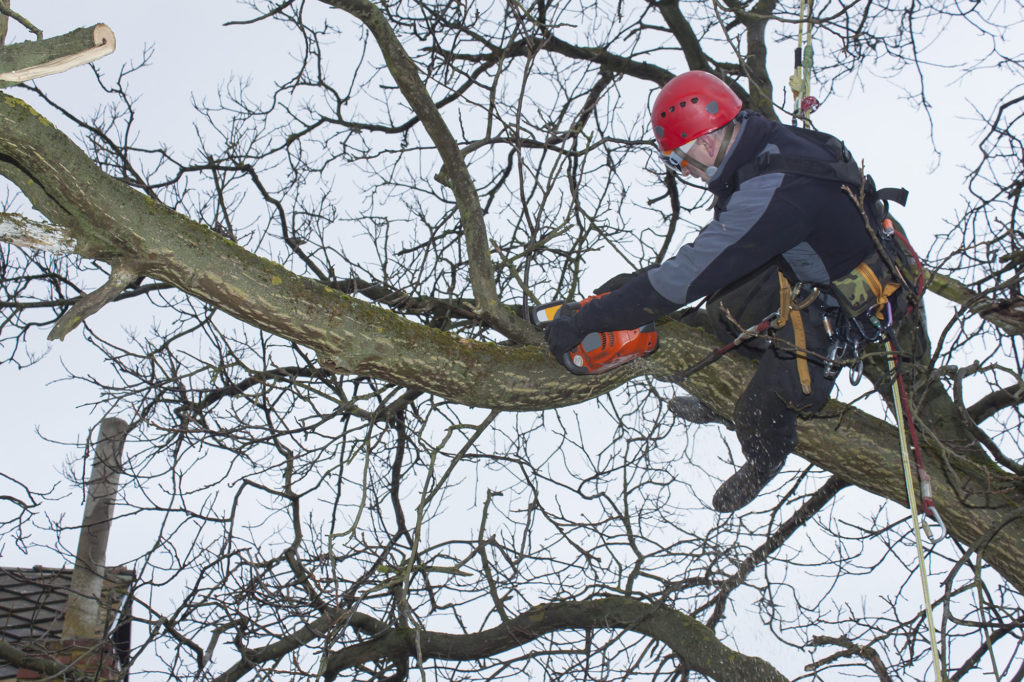 Tree Removal Barrie - Services
