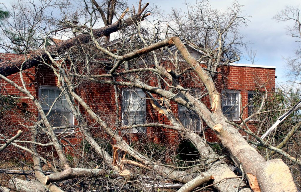 Tree Removal Barrie - Storm Damage Tree Restoration 1